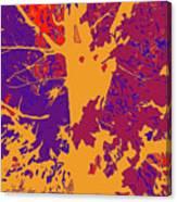 Brandywine  Maple Fall Colors 8 Canvas Print