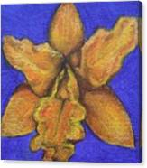 Brassolaeliocattleya Hybrid Canvas Print
