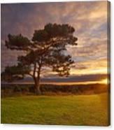 Bratley View Tree Canvas Print