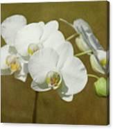 Brazen Beauty Canvas Print