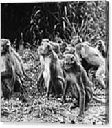 Brazil: Monkeys Canvas Print