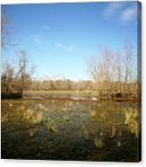 Brazos Bend Winter Wetland Canvas Print