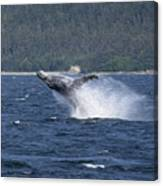 Breaching Whale Paint Canvas Print