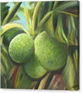 Breadfruits St Kitts Canvas Print