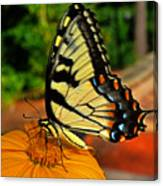 Breakfast At The Gardens - Swallowtail Butterfly 005 Canvas Print