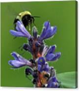 Bumble Bee Breakfast Canvas Print