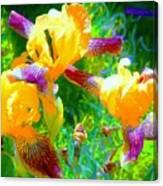 Breakfast Time Oj Irises Canvas Print