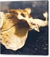 Breaks Of Autumn Canvas Print