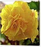 Breathtaking Begonia Canvas Print