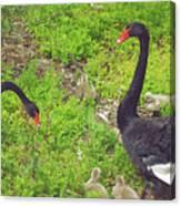 Breeding Pair I Canvas Print