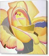 Brenda's Rose Canvas Print