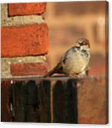 Brick And Bird Canvas Print