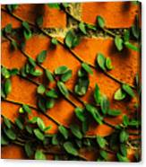 Brick And Leafs Canvas Print