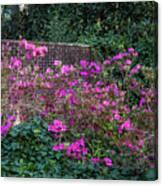 Brick Wall And Azalea Canvas Print