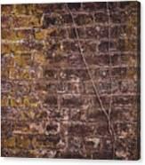 Vine Up A Brick Wall  Canvas Print