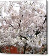 Bricks And Blossoms Canvas Print