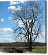 Bridge And A Tree Canvas Print