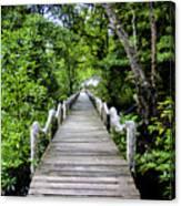 Bridge In Kosrae Canvas Print
