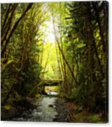 Bridge In The Rainforest Canvas Print