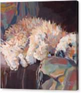 Brie As Odalisque Canvas Print