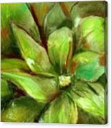 Bright Agave Canvas Print