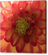 Red And Yellow Flower Bloom Canvas Print