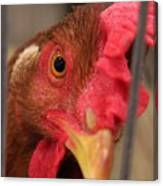 Bright And Colorful Chicken Who Are You Canvas Print