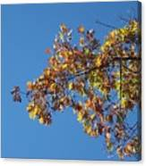 Bright Autumn Branch Canvas Print