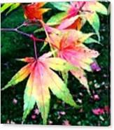 Bright Autumn Leaves Tatton Park Canvas Print