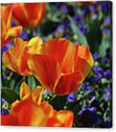 Bright Colored Garden With Striped Tulips In Bloom Canvas Print