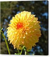 Bright Colorful Dahlia Flower Art Prints Baslee Troutman Canvas Print