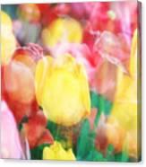 Bright Dreams In The Tulips Canvas Print