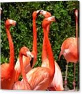 Bright Flamingos Canvas Print