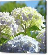 Bright Floral Art Pastel Blue Purple Hydrangeas Flowers Baslee Troutman Canvas Print