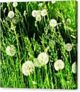 Bright Grass 2 Pd2 Canvas Print