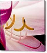 Bright Lily Canvas Print