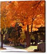 Bright Maple Morning Canvas Print