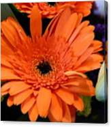 Bright Orange Daisy Canvas Print