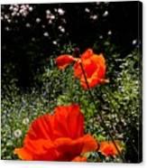 Bright Orange Canvas Print