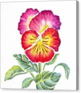Bright Pansy Canvas Print