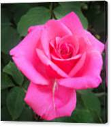 Bright-pink Rose 049 Canvas Print