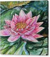 Bright Pink Waterlily Canvas Print