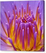 Bright Purple Lotus Canvas Print
