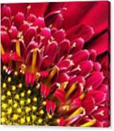 Bright Red Gerbera Daisy Canvas Print