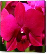 Bright Scarlet Red Orchid Canvas Print