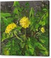 Bright Spot Tenacious D Series Canvas Print