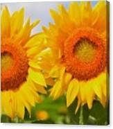 Bright Sunflowers Canvas Print