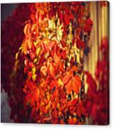 Bright Sunny Red Autumn Plants Canvas Print