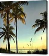 Bright Sunshine Greets The Palms Canvas Print