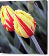 Bright Yellow And Red Tulips Canvas Print